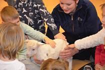 V rámci zážitkového poznávání přírody navštívila děti ve školce kozička se svým kůzlátkem - kozlíkem Sobíkem.
