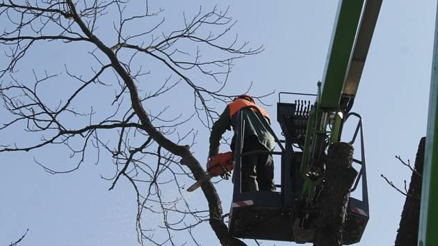 Silničáři se nyní věnují mimo jiného prořezávání stromů u silnic.