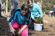 Sedmáci ze ZŠ Jiráskova Benešov při sázení stromků v konopišťském parku.