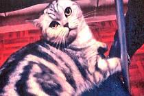 Kočka zmizela z havarovaného Fiatu Punto při páteční odpolední nehodě na hlavní silnici I/3 u benešovské mlékárny.