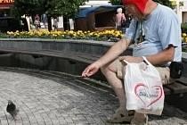 Krmit holuby v Benešově zakázané není.