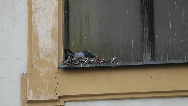 Holubi v Benešově ničí majetek.