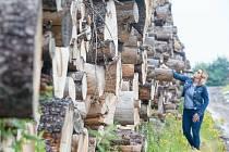 Sklad kůrovcového dřeva.