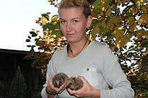 Už nyní volá do vlašimské záchranné stanice denně zhruba dvacet lidí s prosbou o pomoc nalezenému ježkovi.
