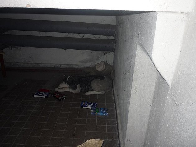 Sklep se psem, na něhož upozornil strážníky obyvatel domu.
