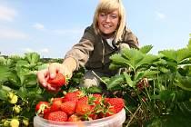 Ilustrační foto: Na sezonní brigády do zahraničí Češi nejčastěji vyrážejí sbírat ovoce nebo jako pomocníci do hotelů