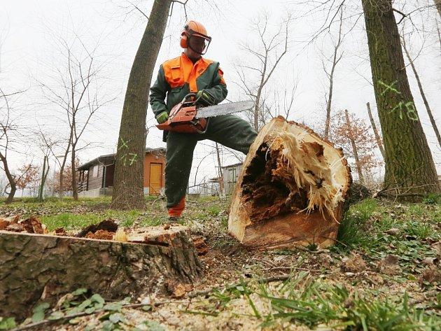 Lidé často skácí stromy, v jejichž dutinách  přezimují netopýři či veverky, nebo v jejich větvích hnízdí ptáci.