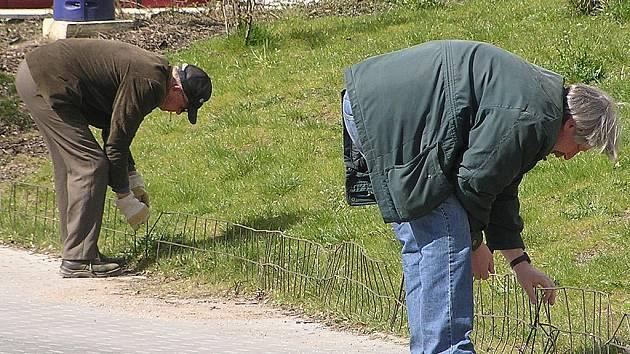 Muži z TS upravují plot.
