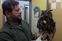 Léčený výr velký v rukou ošetřovatele Jaroslava Svačiny.