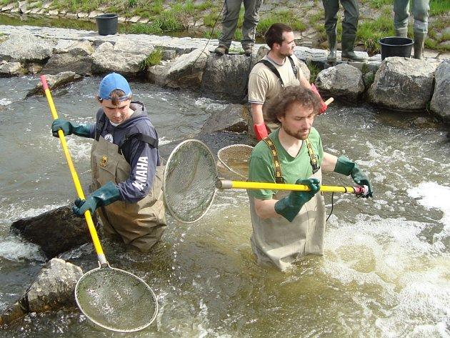 Chytání ryb pro vědecké účely na Blanici ve Vlašimi.