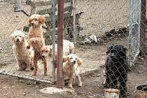 Týraní psi čekají na pomoc.