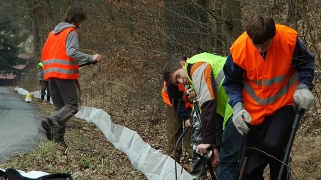 Studenti instalují zábrany proti vniknutí žab na silnici.