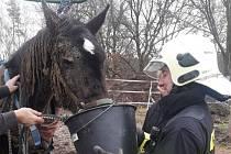 Benešovští hasiči pomáhali koni, který upadl na pastvině a nedokázal se sám zvednout.