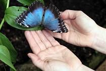 Bývalé chátrající skleníky se díky nadšencům z Ochrany fauny ČR proměnily v unikátní motýlárium.