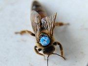 Včelařství již není doménou jen jednotlivců. Čím dál více se o včely zajímají i zájemci z řad veřejnosti, kteří touží získat o včelařství podrobnější informace. Takové naleznou třeba pod horou Blaník