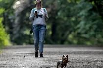 Na vycházku můžete přes den (od 5 do 21 hod) po celém území obce, NIKOLIV OKRESU. Venčení psů v noci je do 500 od bydliště. Ilustrační foto.