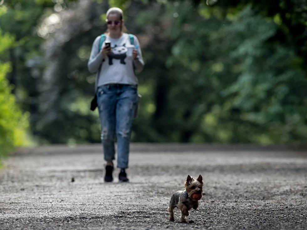Venčení psů. Ilustrační foto.