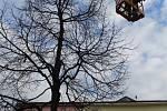 Zdobení velikonočního stromu na Masarykově náměstí v Benešově.