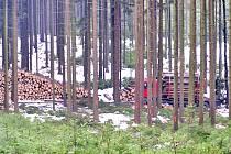 Zákaz vstupu do lesů u Záhoří a Nasavrk na České Sibiři platí okamžitě. Potrvá do konce května.
