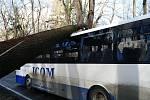 Spadlý strom na autobus na silnici mezi Benešovem a Konopištěm.