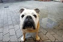 Nahlédněte do psího mozku a zjistěte, proč se psi bojí