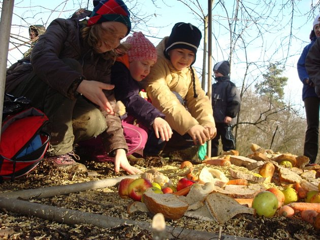 S přikrmováním lesní zvěře pomáhají i děti z mateřských či základních škol.
