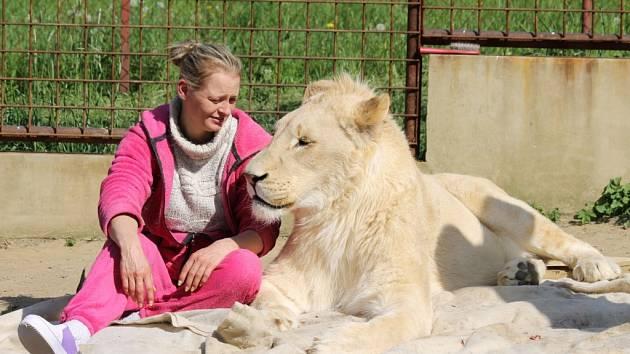 Na přítomnost lva v obci si museli obyvatelé Břežan chvíli zvykat.