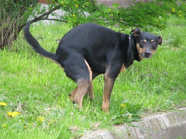 Sněmovna odsouhlasila zvýšení poplatků za psy pro důchodce.