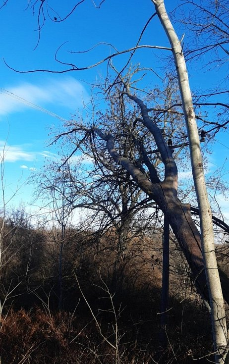 Radlík (okres Praha-západ)-mohutný strom spadlý do drátů elektrického vedení.
