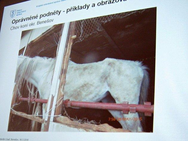 Kůň chovaný v nevyhovujících podmínkách bývalé bažantnice.