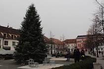Převoz vánočního stromu na Masarykovo náměstí v Benešově.