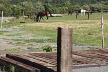 Česká inspekce životního prostředí kontrolovala farmu vloni čtyřikrát.