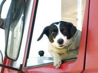 Ilustrační foto: Pes by neměl za jízdy vyhlížet z oken