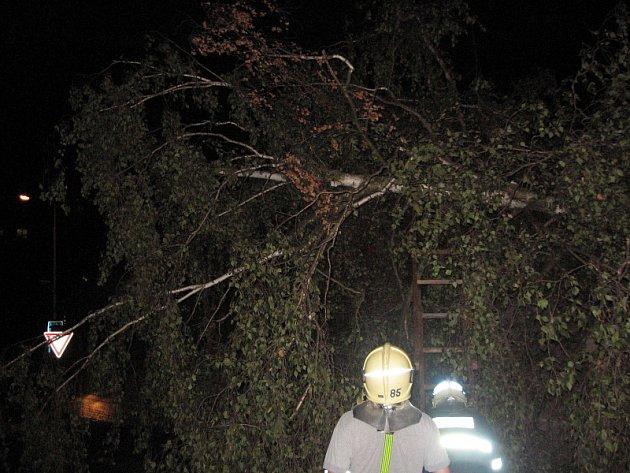 Proč padl strom v Purkynově ulici v Kladně bude předmětem šetření