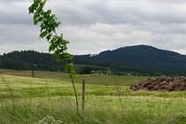 Stromky u Chlístova podél silnice číslo 106.