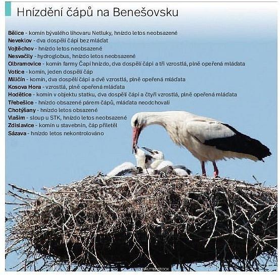 Hnízdění čápů na Benešovsku.