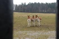 Dolní Dobřejov je místem, kde se zvířata připravují na návrat do volné přírody. Zoologická zahrada tam chová nejen koně Převalského, ale také divoké osly Kiang , lamy, losy a dokonce i ovce a kozy.