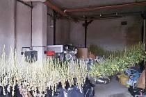 Ve sklepě domu, který řadu týdnů monitorovali, našli kriminalisté plně vybavenou pěstírnu konopí setého.
