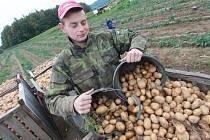 Na Benešovsku pěstuje brambory jen hrstka zemědělců. Které plodině dávají přednost?