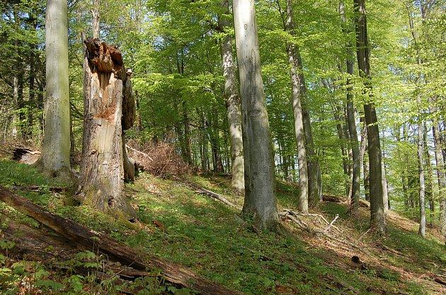 Národní přírodní rezervace Ve Studeném je nejstarší v benešovském okresu.
