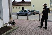 Vystrašené pejsky zajistili strážníci u benešovské pošty.
