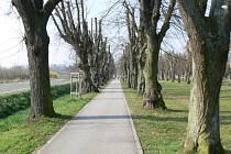 Vzrostlé stromořadí s lavičkami a výhledem na Sázavský klášter patří k hojně navštěvovaným místům.