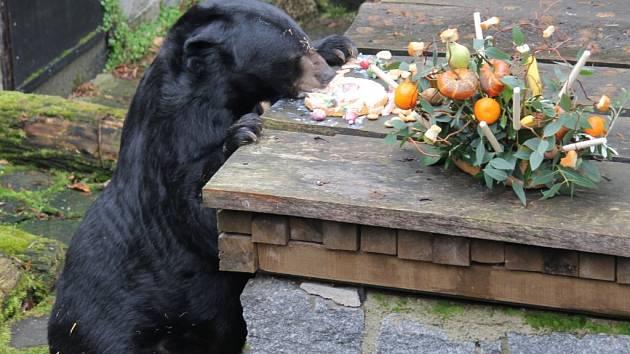 Medvěd Jiří by partnerkou jistě nepohrdl.