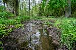 Opatření proti suchu: přírodě blízké retenční opatření – mokřady