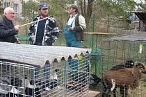 Výstava Českého svazu chovatelů Týnec