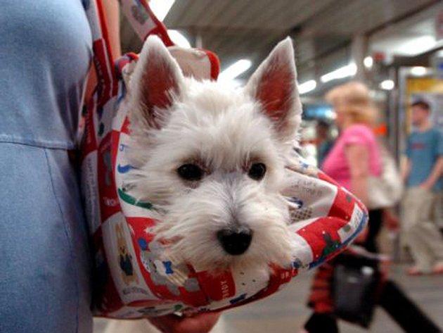 Cestovat se psy chce také znalosti.