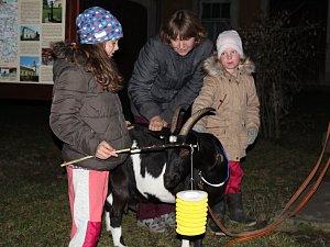 Koza doprovodila lampiónový průvod v Kamberku