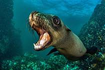 Fotografie z podmořského světa potěší návštěvníky výstavy.