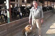 Border kolie už řadu let pomáhají soukromému zemědělci Františku Mikolášovi při nahánění dobytka z pastvin do stájí.