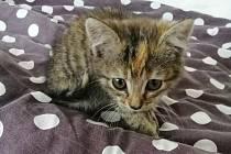 Kotě zachráněné na rychlostní silnici.